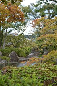 子規の庭風景