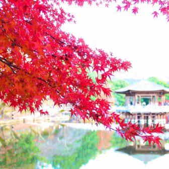 奈良の浮御堂と紅葉