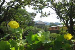 子規の庭の風景2